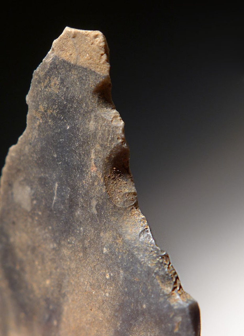 M370 - FINEST MOUSTERIAN NEANDERTHAL ENGRAVER FLAKE TOOL FROM FRANCE WITH AESTHETIC COLOR FEATURE