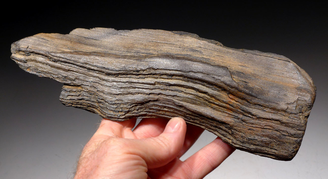 PL159 - LIFELIKE MIOCENE FOSSILIZED PETRIFIED WOOD LOG FROM EUROPE