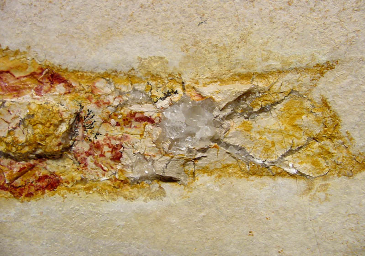 SQ003 - RED SOLNHOFEN FOSSIL SQUID WITH CALCITE CRYSTALS ON LARGE LIMESTONE SLAB