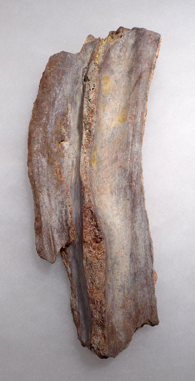DBX018 - ULTRA-RARE SPINOSAURUS PARTIAL FOSSIL SAIL SPINE BONE