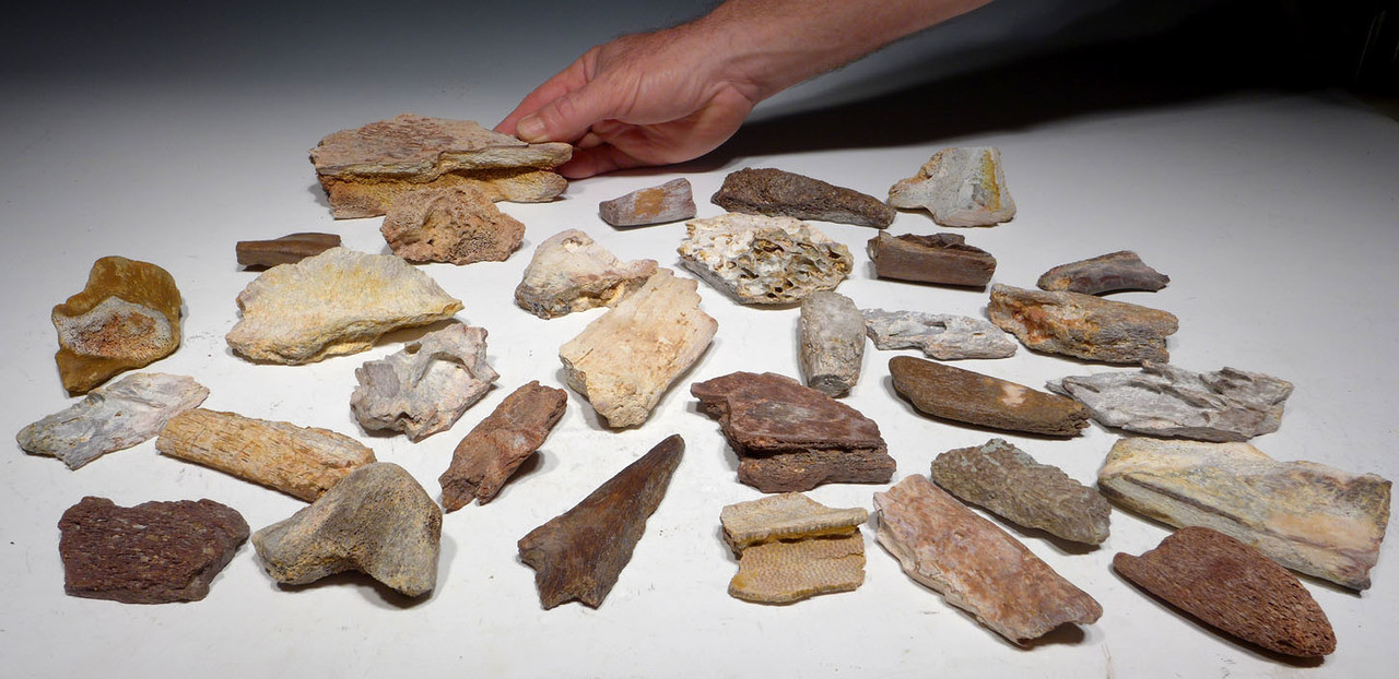 BONELOT2 - COLLECTION OF 31 FOSSIL DINOSAUR AND REPTILE BONES