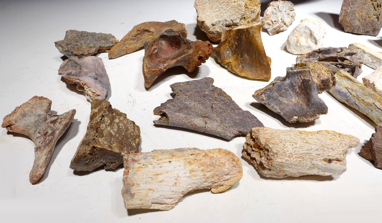 BONELOT5 - LOT OF 25 BEST PIECES OF DINOSAUR AND REPTILE BONE FOSSILS