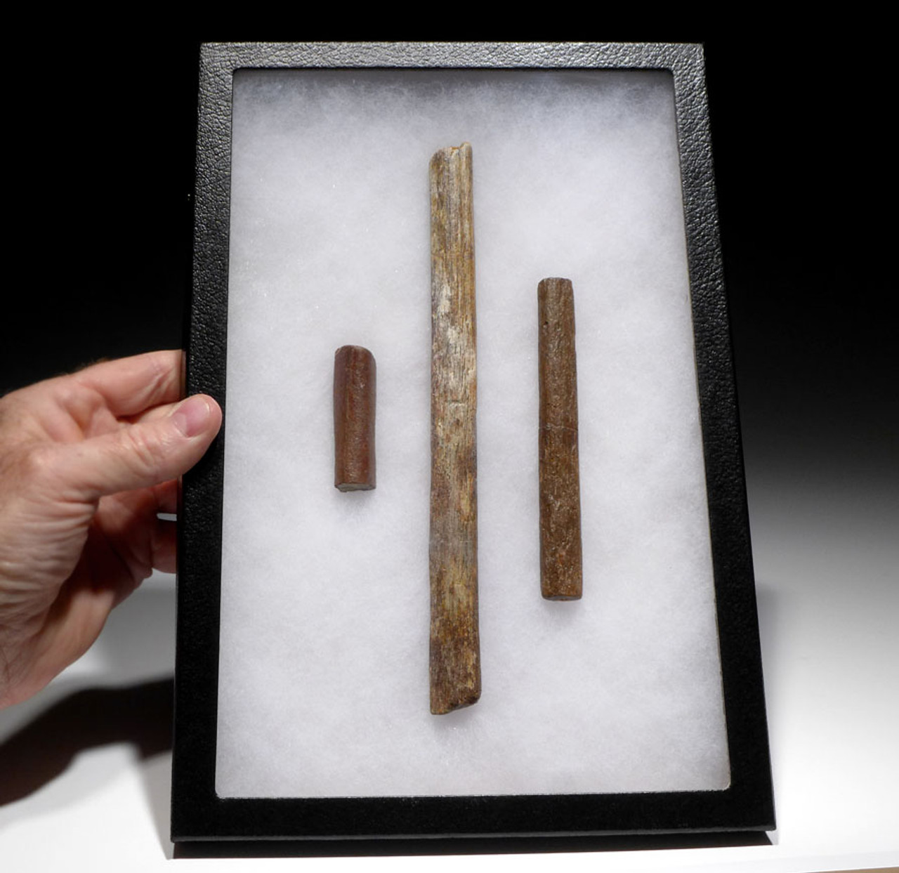 RARE COLLECTION OF PTERODACTYL LIMB BONES FROM A LARGE PTEROSAUR OF NORTH AFRICA *DBX024