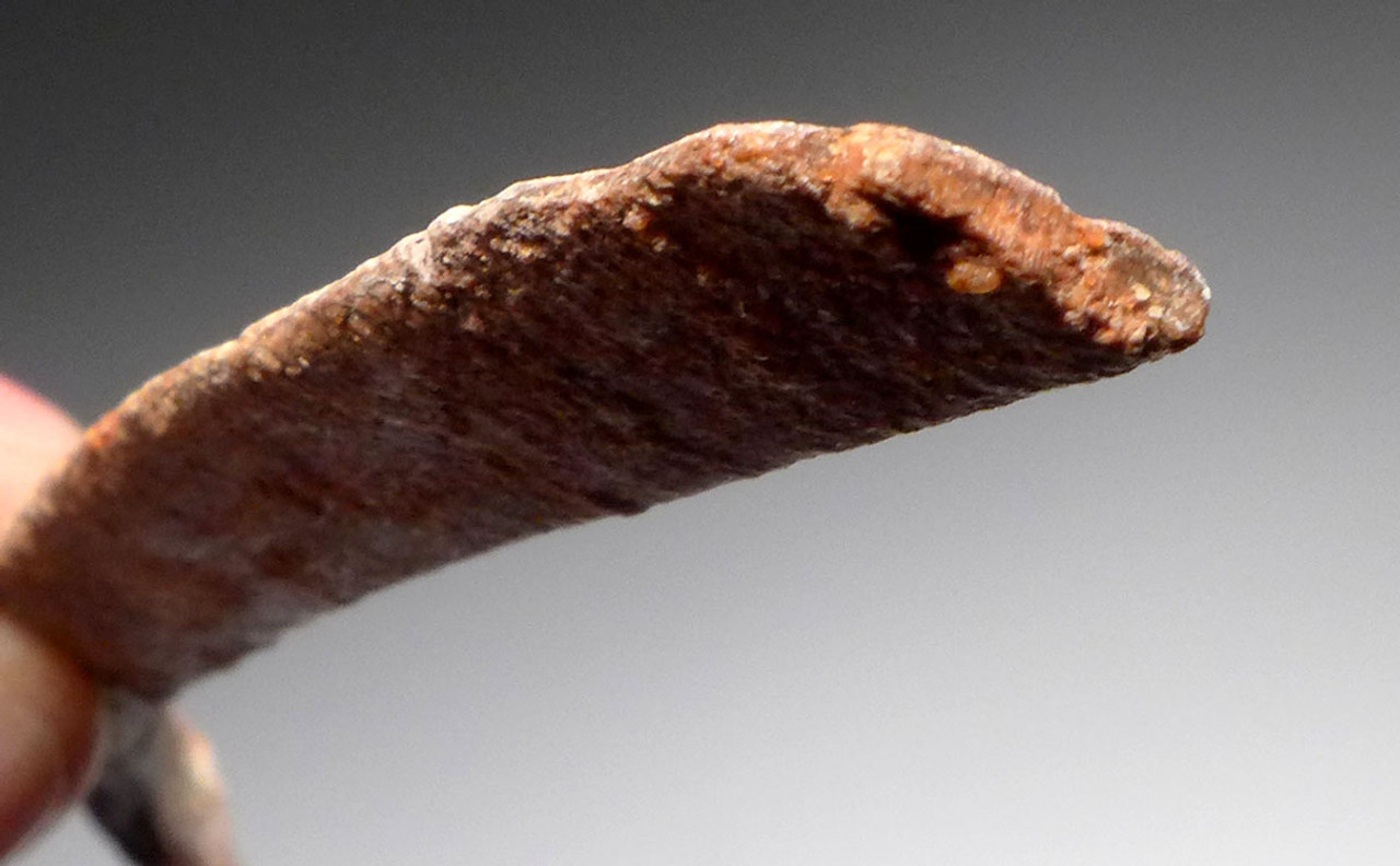 "ULTRA RARE COMPLETE FOSSIL DROMAEOSAUR RIB DINOSAUR BONE FROM A ""RAPTOR"" *DBX023"