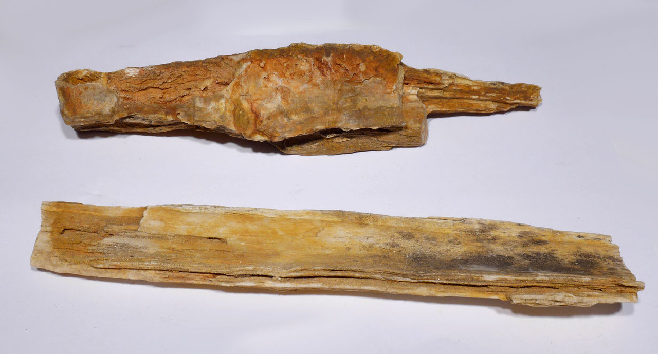 TWO RARE PETRIFIED LOG WOOD PIECES FROM THE SOUTH CENTRAL SAHARA DESERT *PL162