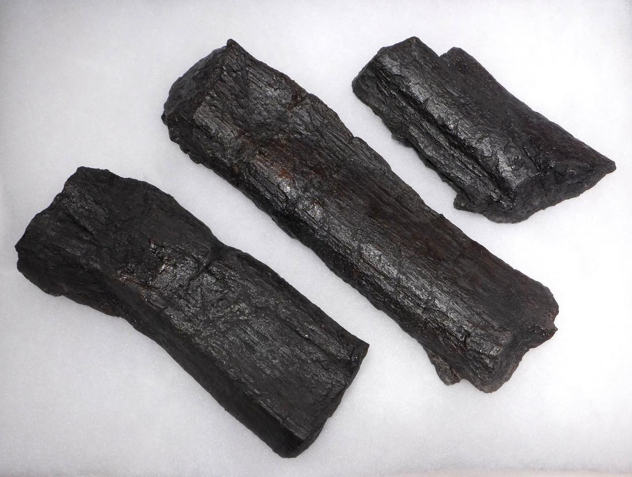 CAMARASAURUS GIANT SAUROPOD JURASSIC DINOSAUR FOSSIL RIB BONES *DBX026