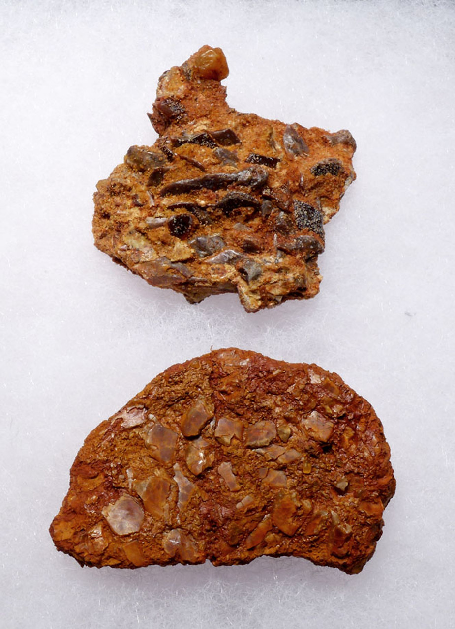 "FOSSIL DROMAEOSAUR ""RAPTOR"" COPROLITES WITH DIGESTED FISH SCALES AND BONES *DT6-292"