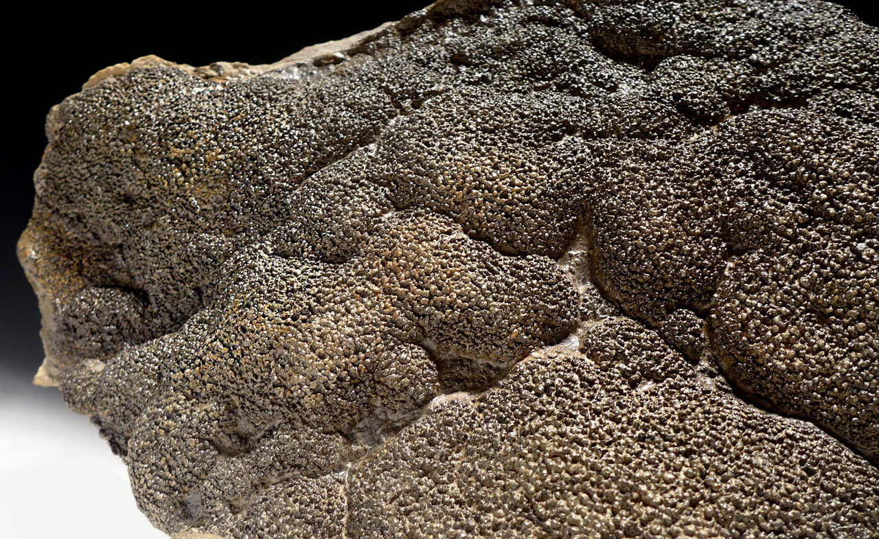ULTRA-RARE MUSEUM-CLASS FOSSIL STROMATOLITE MICROBIAL CYANOBACTERIA COLONY MAT FROM THE PERMIAN *ST018