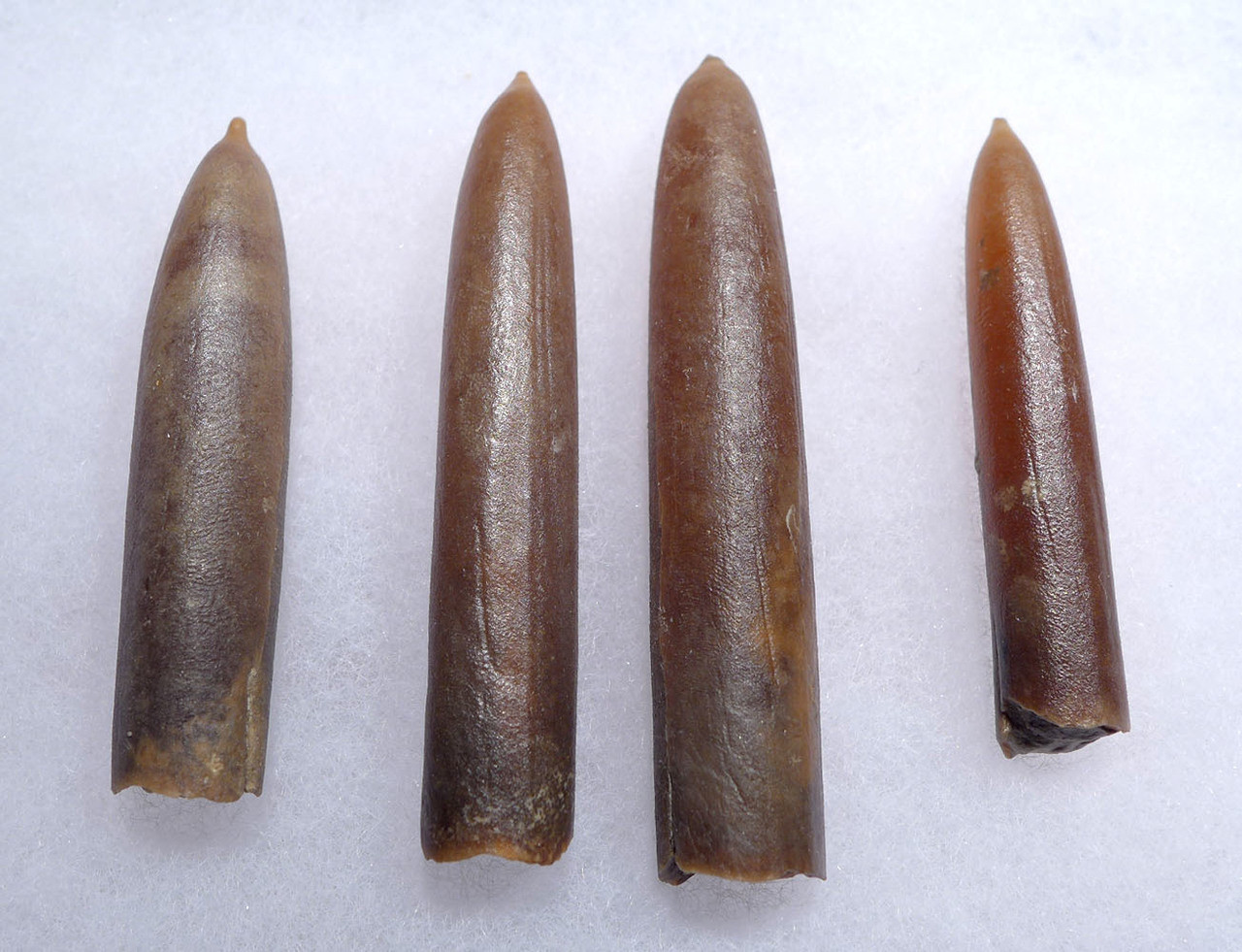 FOUR NATURAL GONIOTEUTHIS SOLID CALCITE BELEMNITES FROM THE CRETACEOUS PERIOD *BEL100