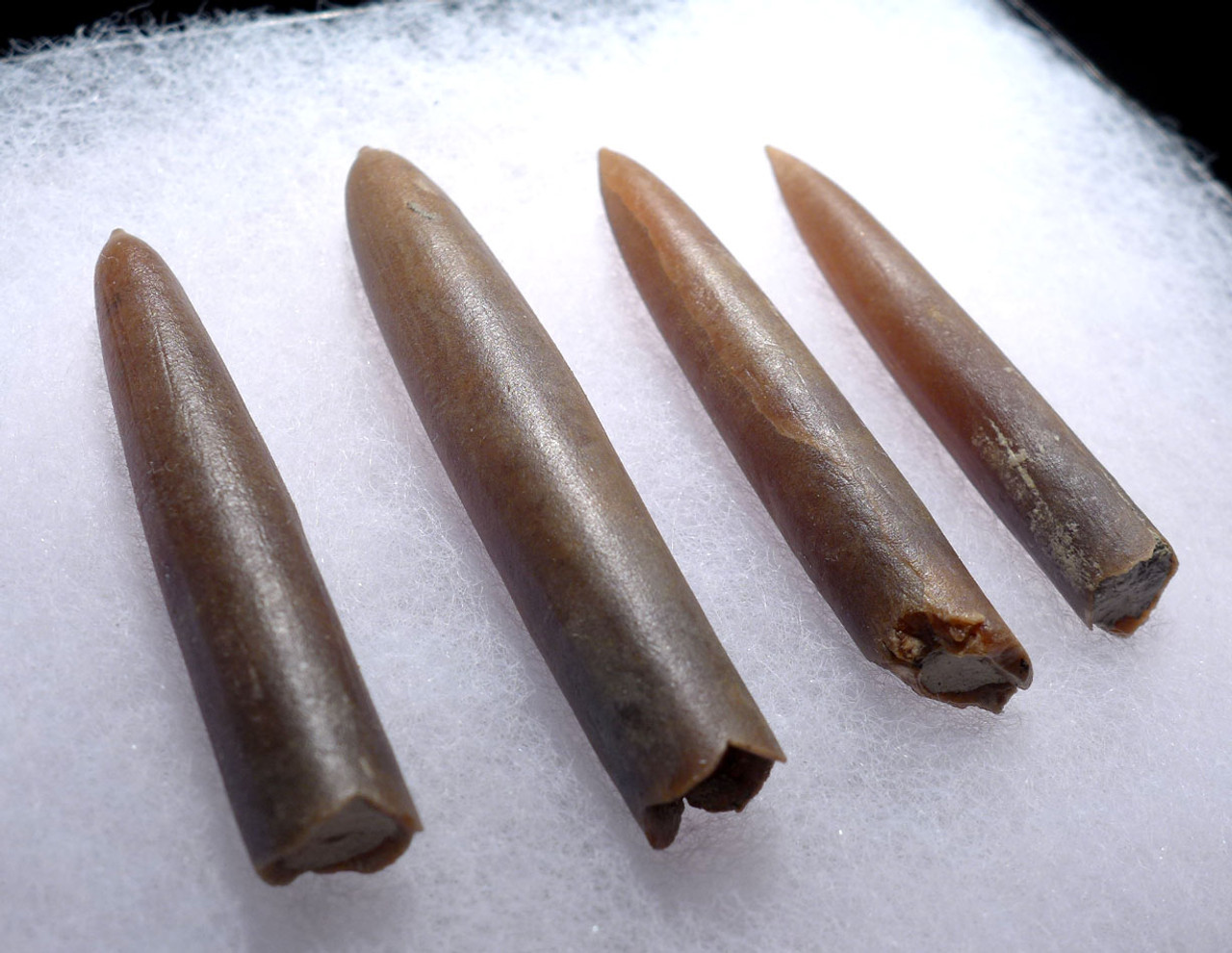 FOUR NATURAL GONIOTEUTHIS SOLID CALCITE BELEMNITES FROM THE CRETACEOUS PERIOD *BEL101