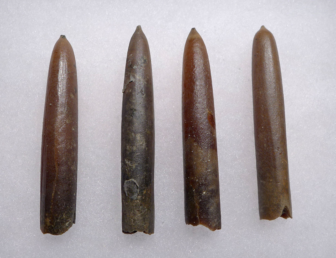 FOUR NATURAL GONIOTEUTHIS SOLID CALCITE BELEMNITES FROM THE CRETACEOUS PERIOD *BEL103