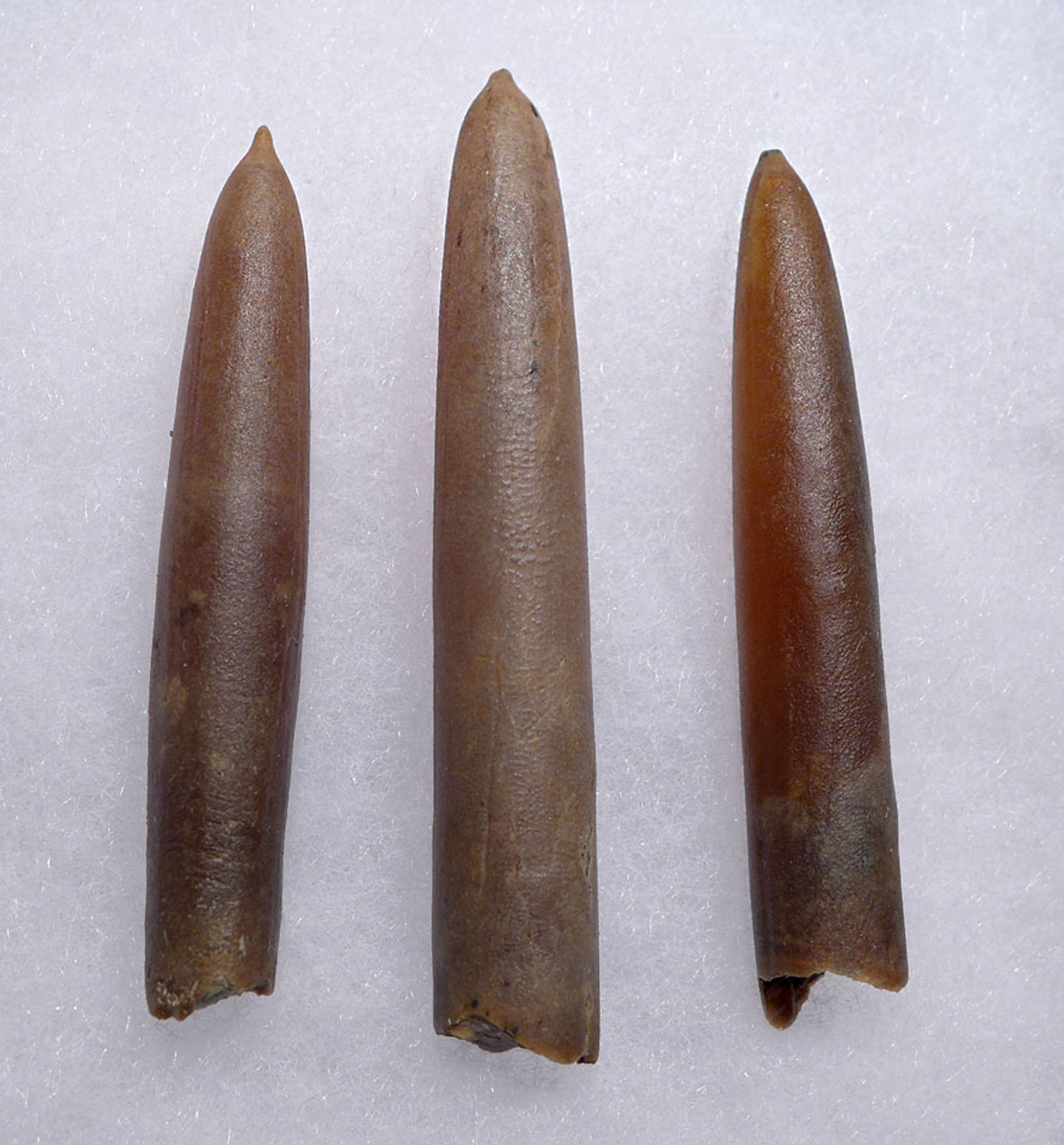 THREE NATURAL GONIOTEUTHIS SOLID CALCITE BELEMNITES FROM THE CRETACEOUS PERIOD *BEL105