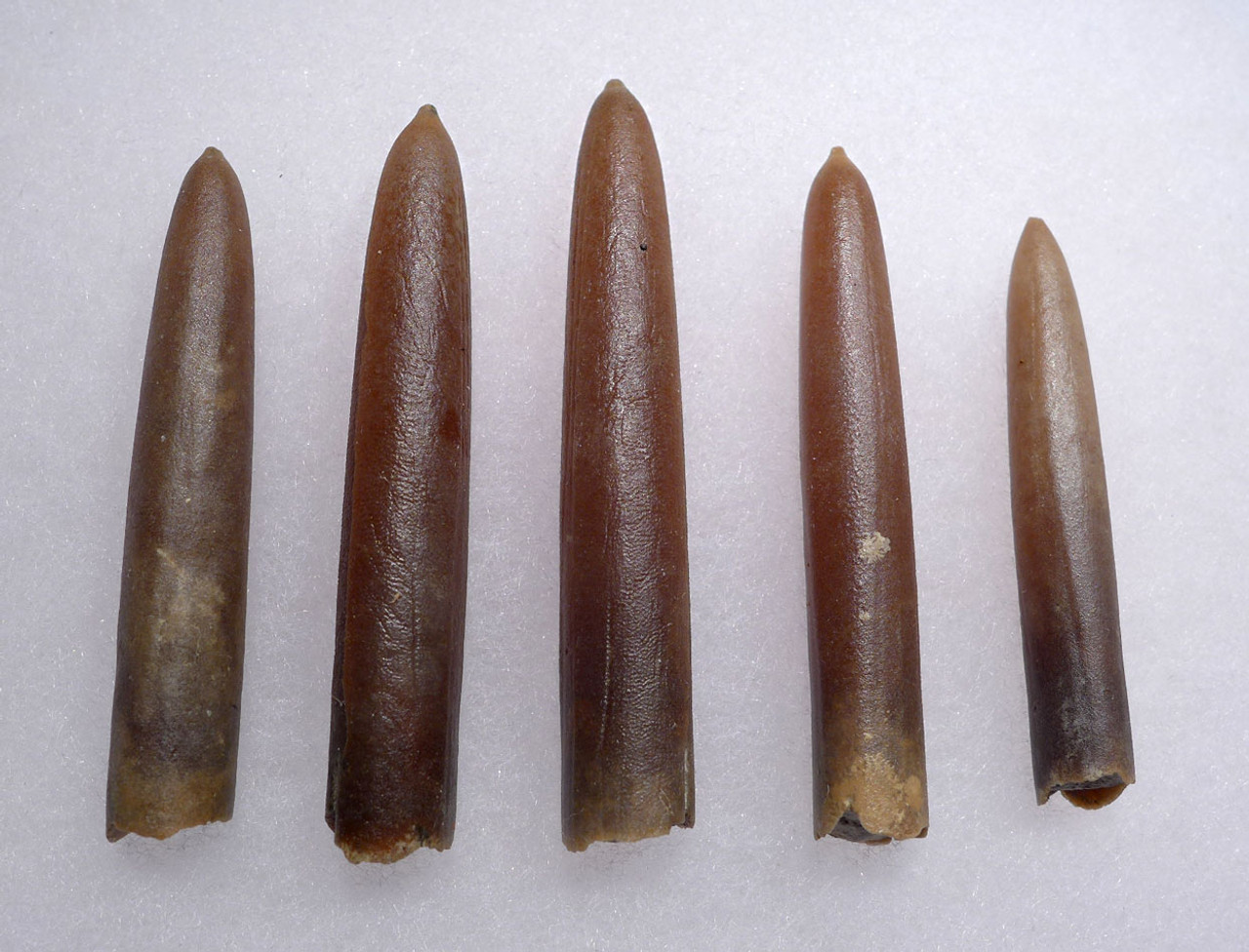 FIVE NATURAL GONIOTEUTHIS SOLID CALCITE BELEMNITES FROM THE CRETACEOUS PERIOD *BEL102