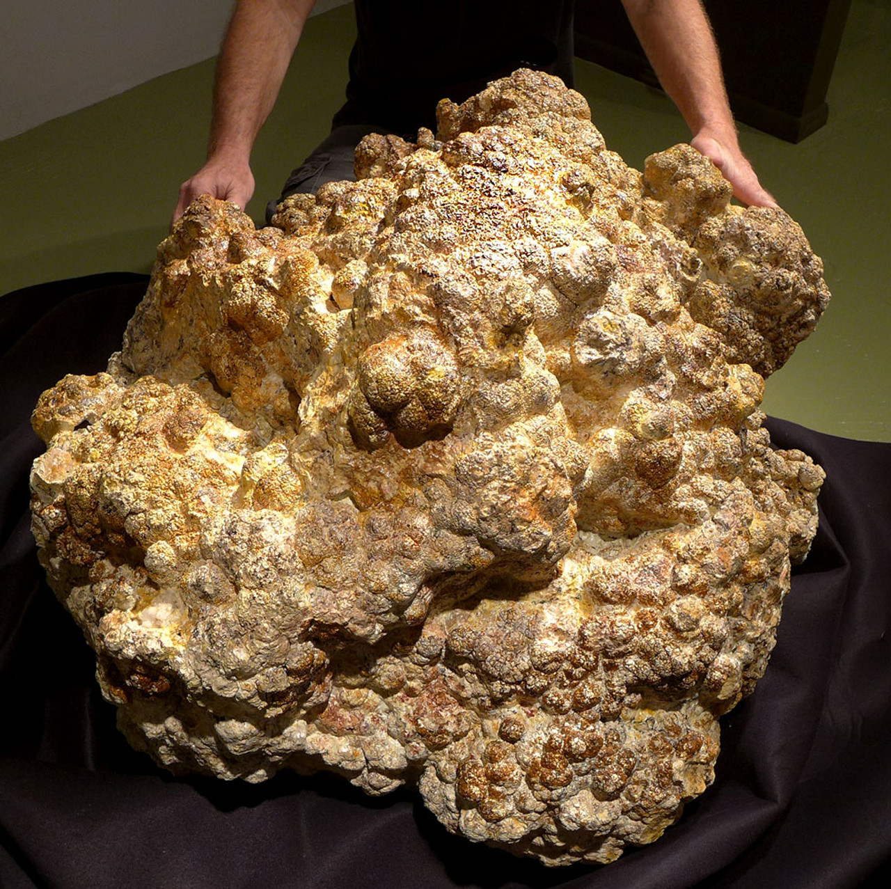 MUSEUM-CLASS GIANT LACUSTRINE FOSSIL STROMATOLITE SUPER-COLONY FROM THE LOWER PERMIAN OF GERMANY *STXL003