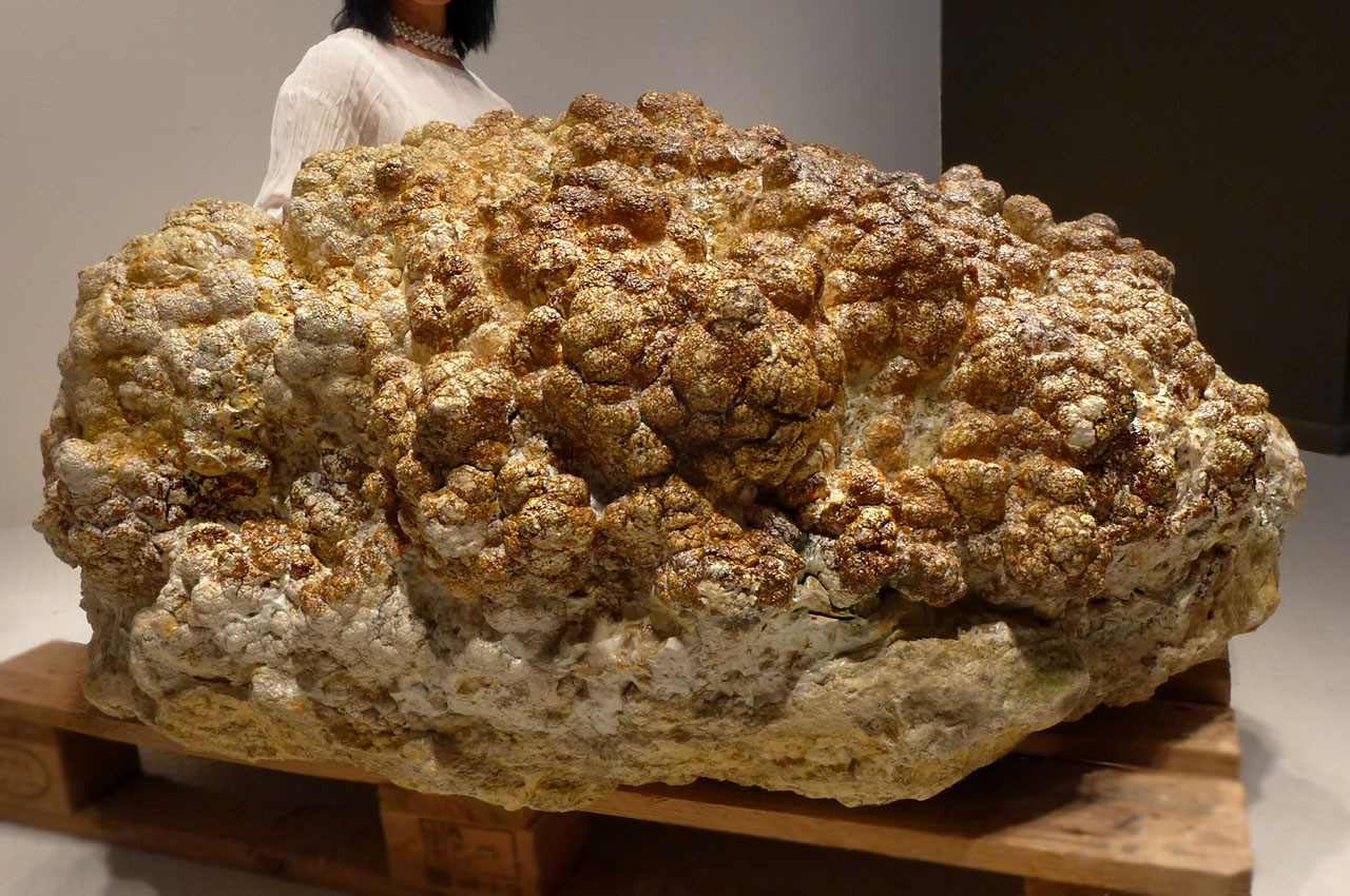 LARGEST WORLD FOSSIL STROMATOLITE COLONY