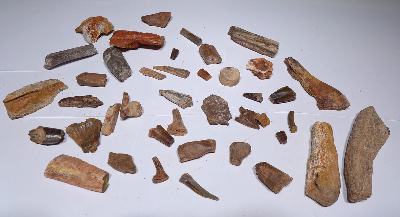 COLLECTION OF NICE 40 FOSSIL DINOSAUR AND REPTILE TEETH AND BONES  *BONELOT17