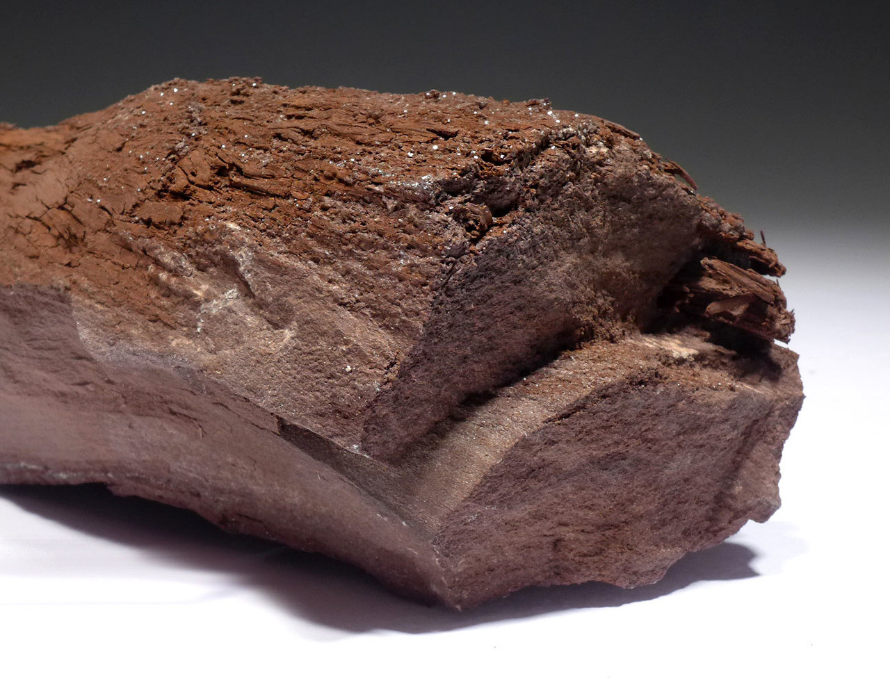 RARE TRIASSIC PERMINERALIZED LOG OF PETRIFIED WOOD WITH SPARKLING DRUSY CRYSTALS FROM GERMAN COAL DEPOSIT *PL174