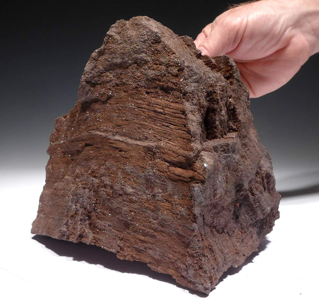 RARE TRIASSIC PERMINERALIZED LOG OF PETRIFIED WOOD WITH SPARKLING DRUSY CRYSTALS FROM GERMAN COAL DEPOSIT *PL173