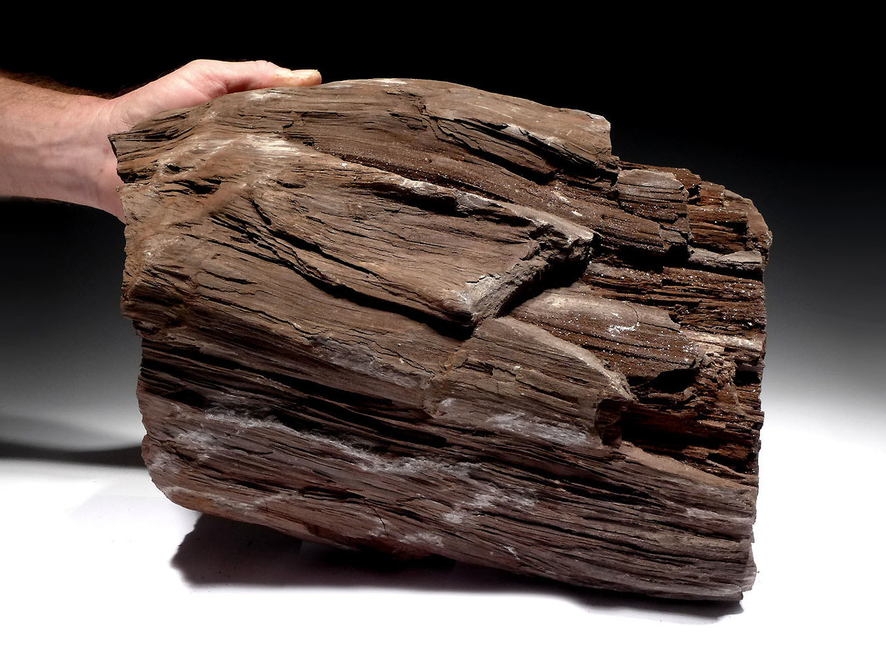 permineralized wood log