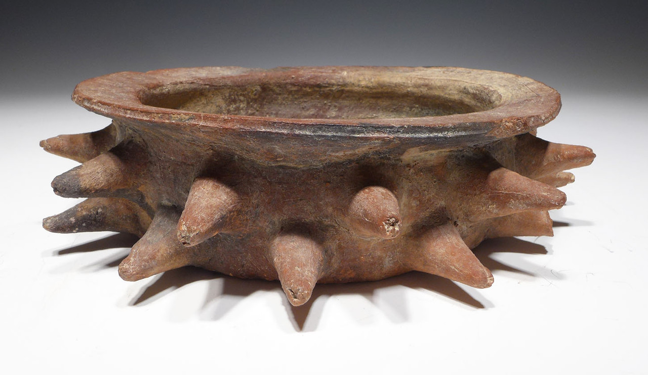 UNBROKEN LONG SPIKE MAYAN CEIBA TREE THORN BOWL FOR RITUAL OFFERINGS *PC282
