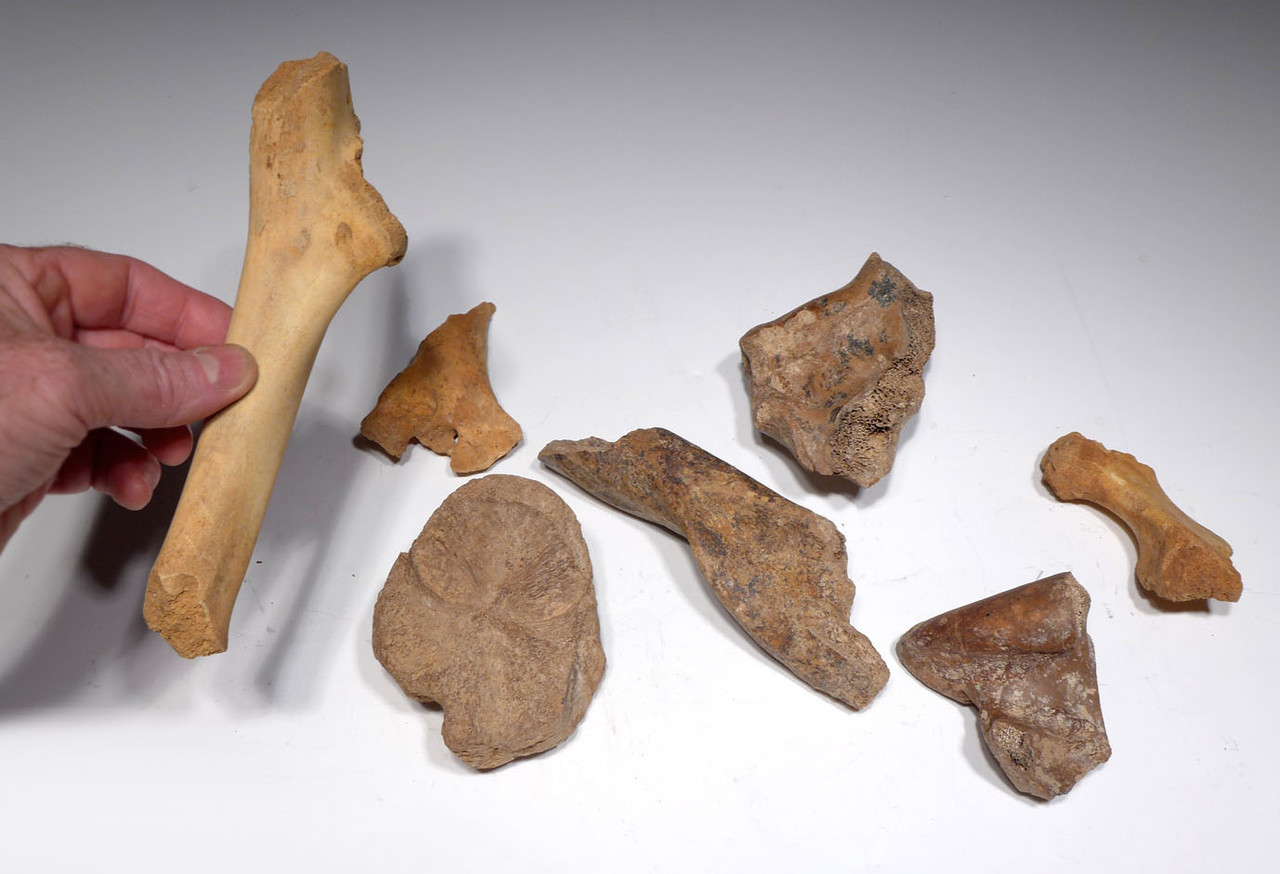 FOSSIL CAVE BEAR BONES FROM THE FAMOUS DRACHENHOHLE DRAGONS CAVE IN AUSTRIA *CAVELOT1