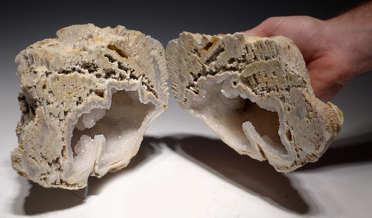 "ULTRA-RARE LARGE  ""ICE CAVE"" COMPLETE FOSSIL CORAL COLONY GEODE WITH QUARTZ CRYSTALS - BEST OF THE COLLECTION *PCOR001"