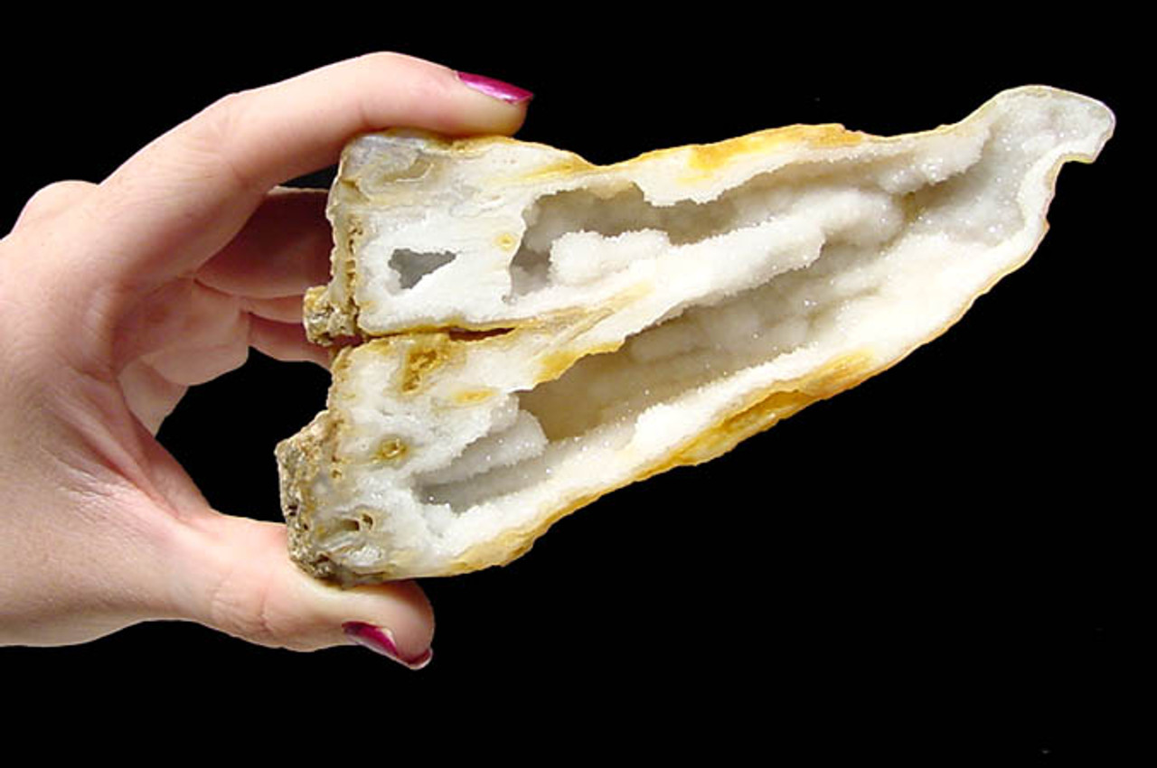 RARE GEM GRADE AGATIZED CORAL WITH PURE WHITE DRUSY CRYSTAL INTERNAL STRUCTURES *COR-021