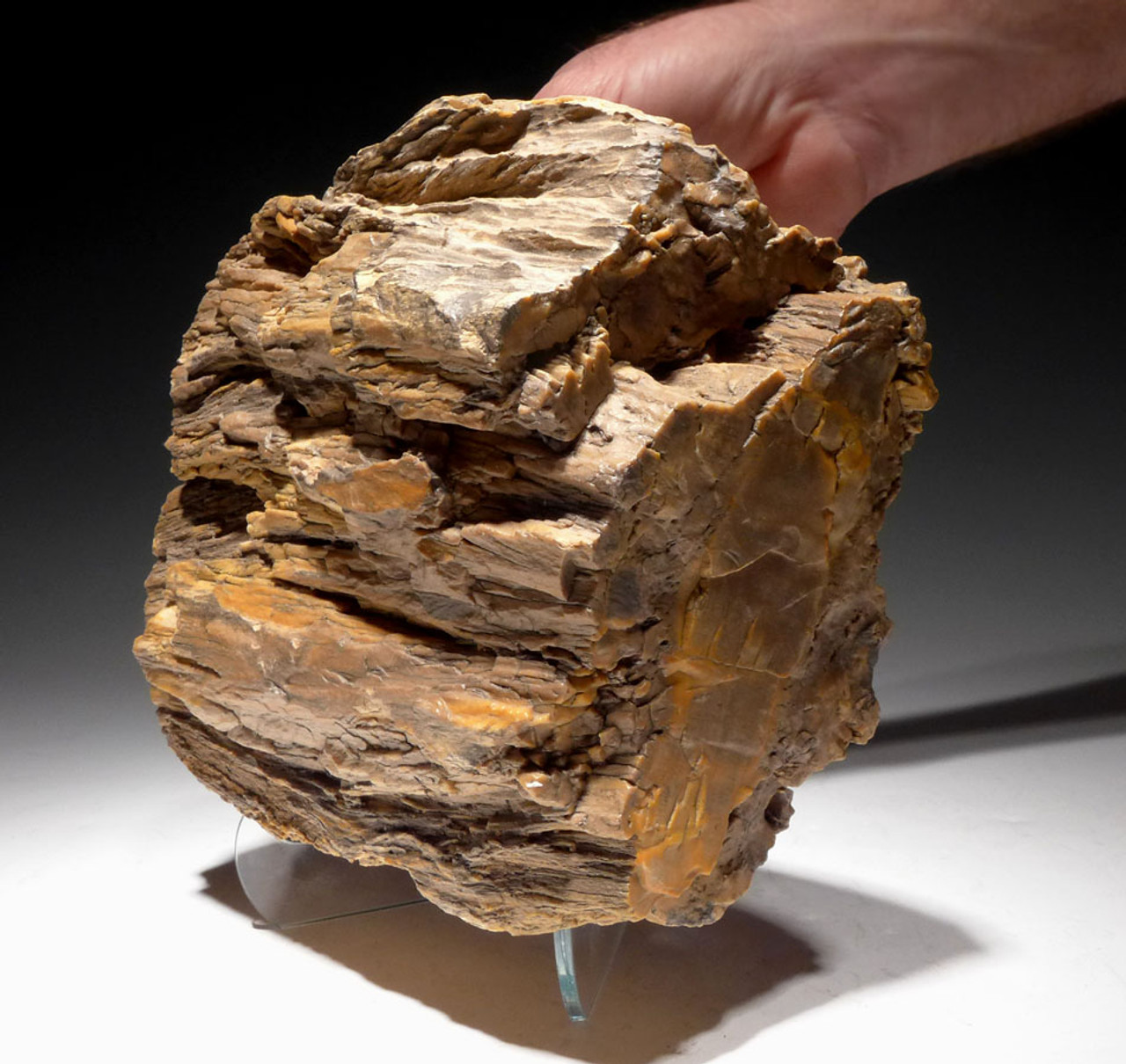 SUPER RARE PETRIFIED LOG FROM THE SOUTH CENTRAL SAHARA DESERT *PL160