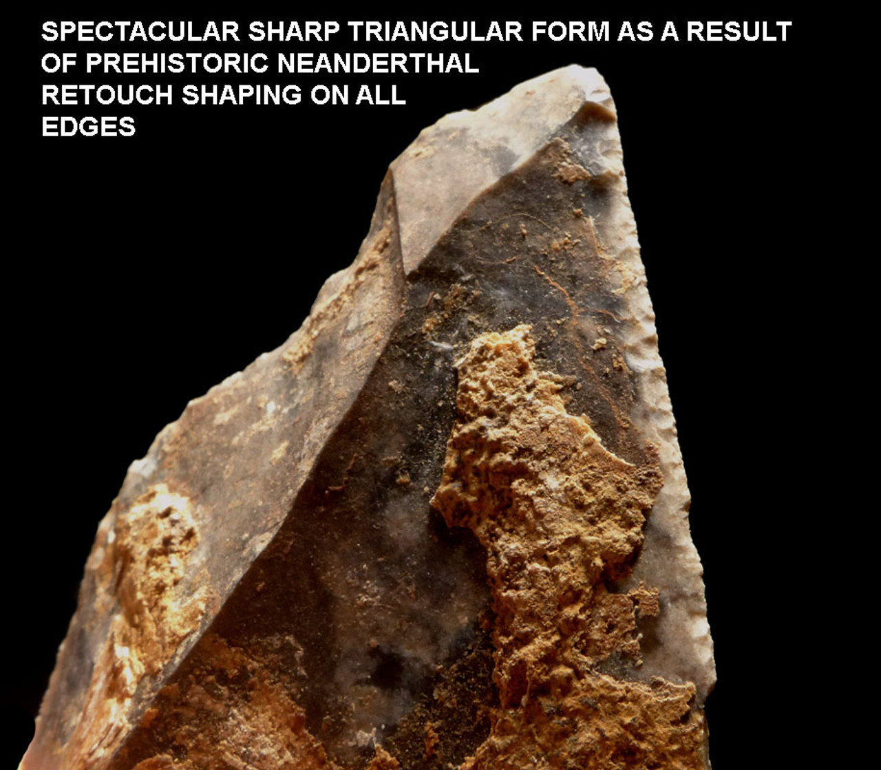 RARE NEANDERTHAL MOUSTERIAN POINT SPEARHEAD WITH IMPROVED INTELLIGENT FORM M336
