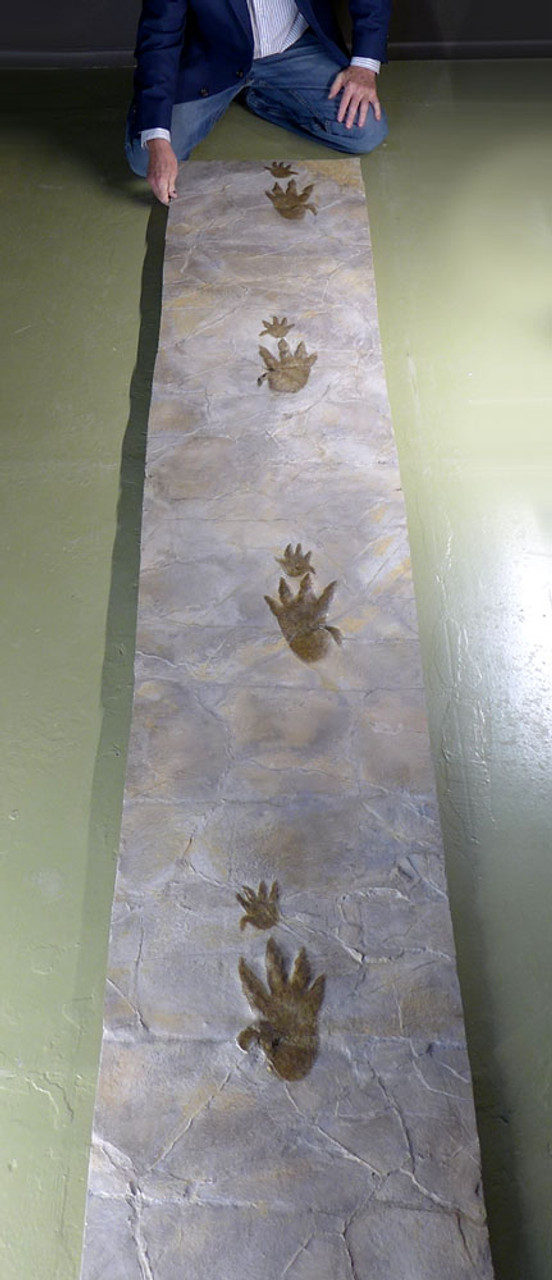 EXTREMELY RARE 9 FOOT LONG CHIROTHERIUM TRIASSIC FOSSIL TRACKWAY WITH HAND PRINT AND FOOTPRINT IMPRESSIONS *FP003