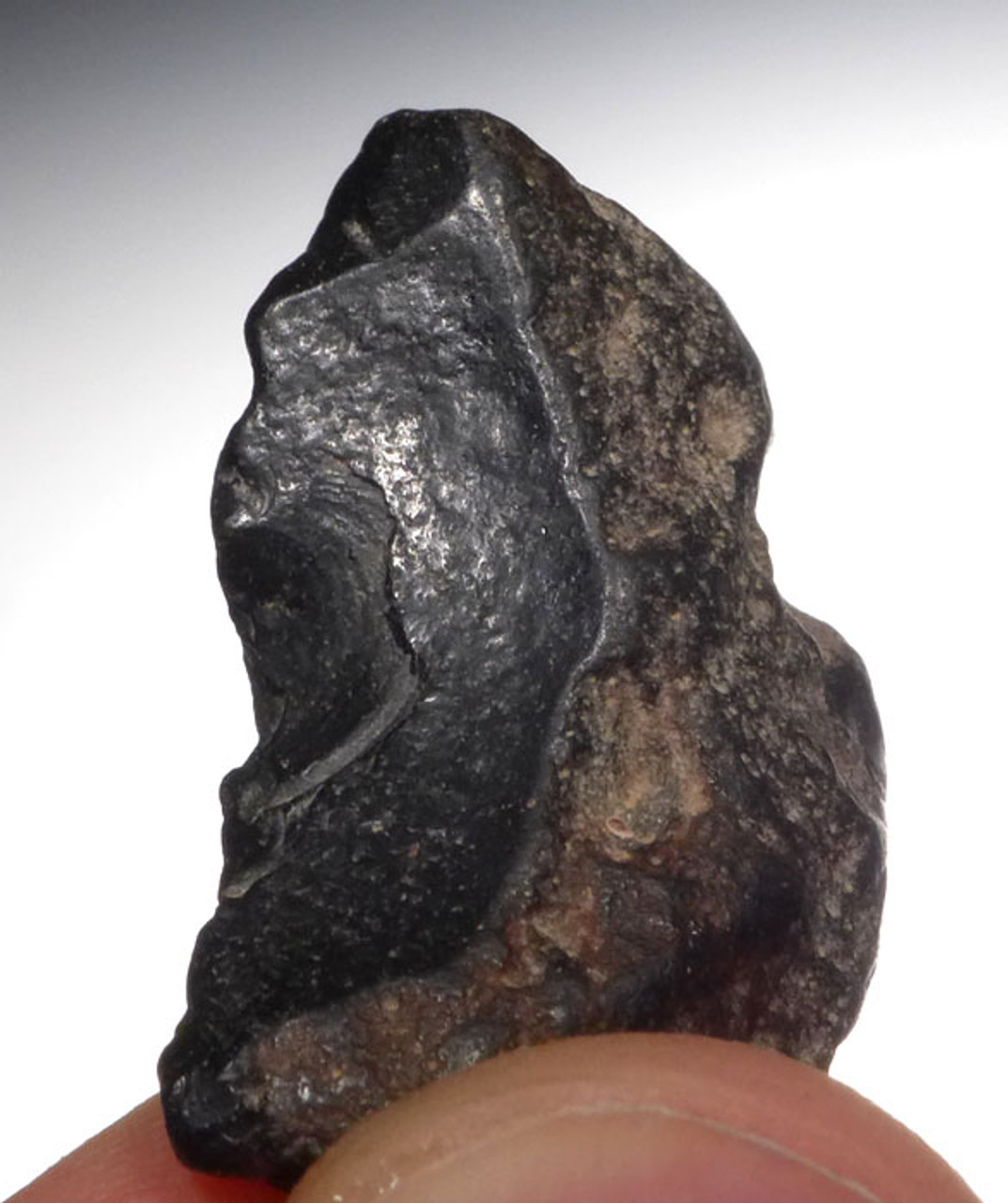 HOMO ERECTUS CLACTONIAN FLAKE TOOL FROM NORTH EUROPE *CL005