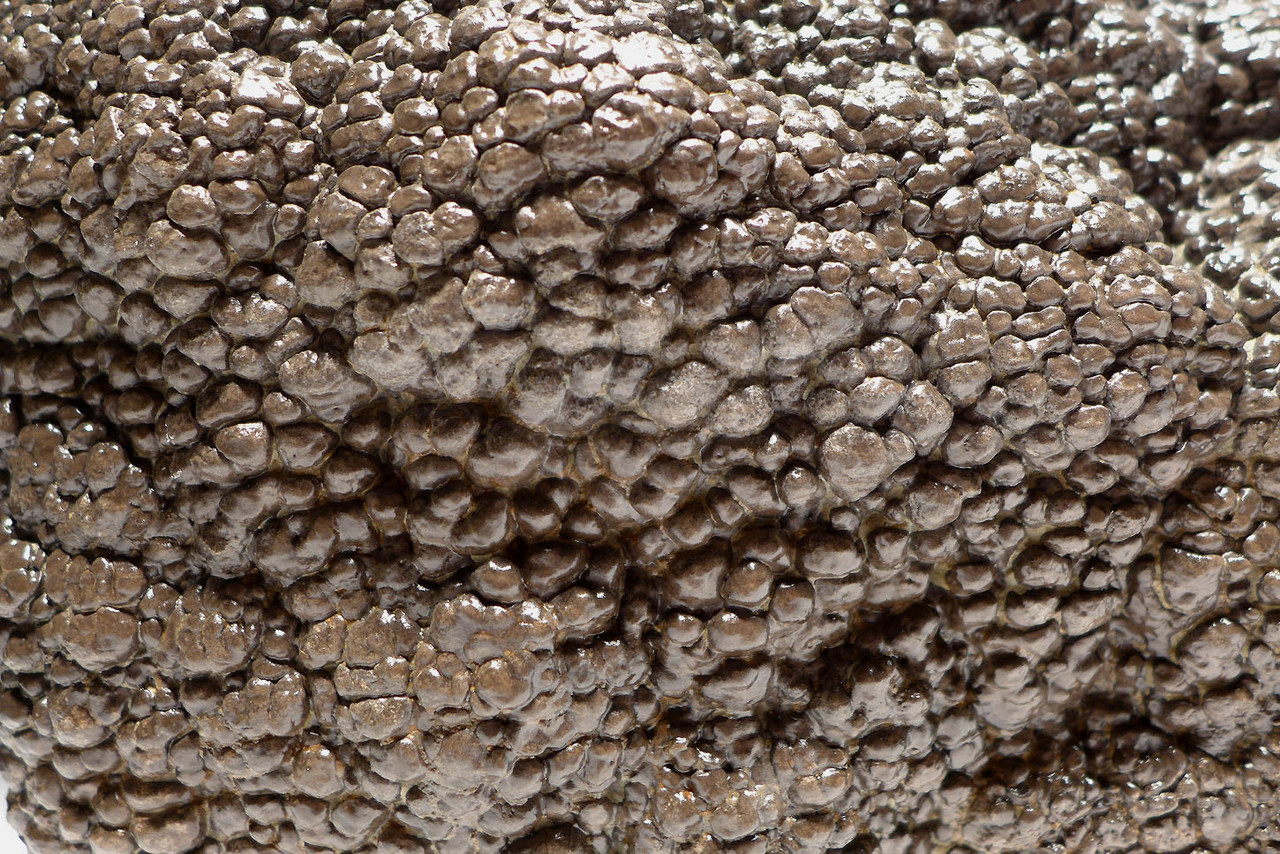 MUSEUM-CLASS GIANT PERMIAN FOSSIL STROMATOLITE CYANOBACTERIA COLONY IN NATURAL FORM *STRX007