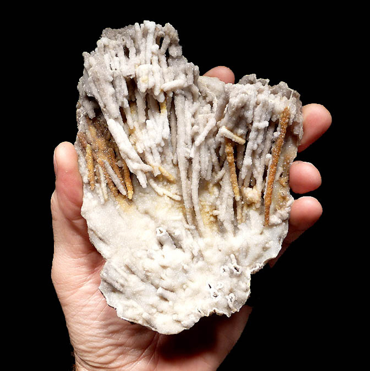 GEM GRADE AGATIZED FOSSIL CORAL WITH DRUSY CRYSTALS OVER DELICATE FREE-STANDING POLYP RODS *COR093