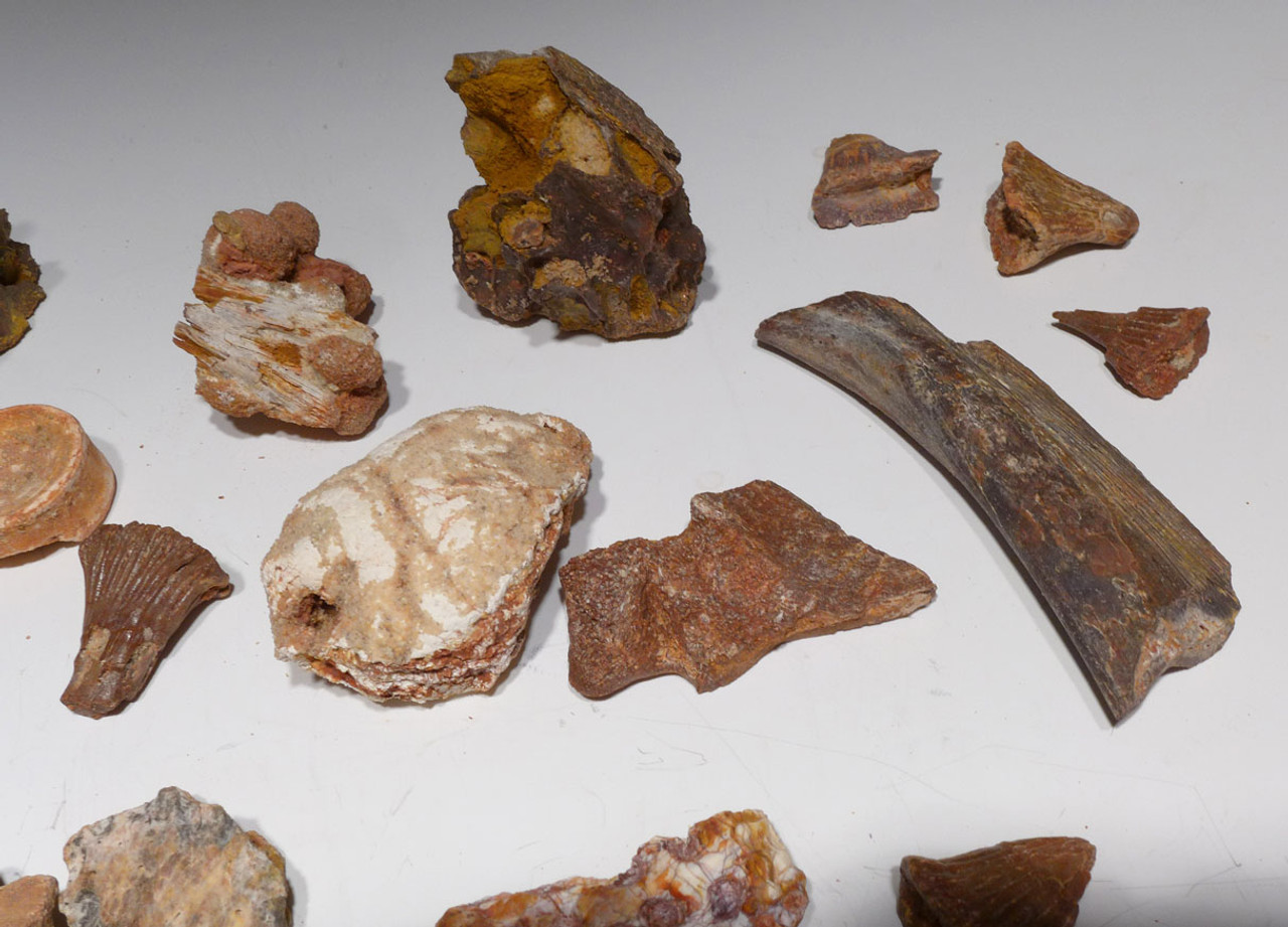 COLLECTION OF 35 FOSSIL DINOSAUR AND REPTILE BONES AND TEETH  *BONELOT55