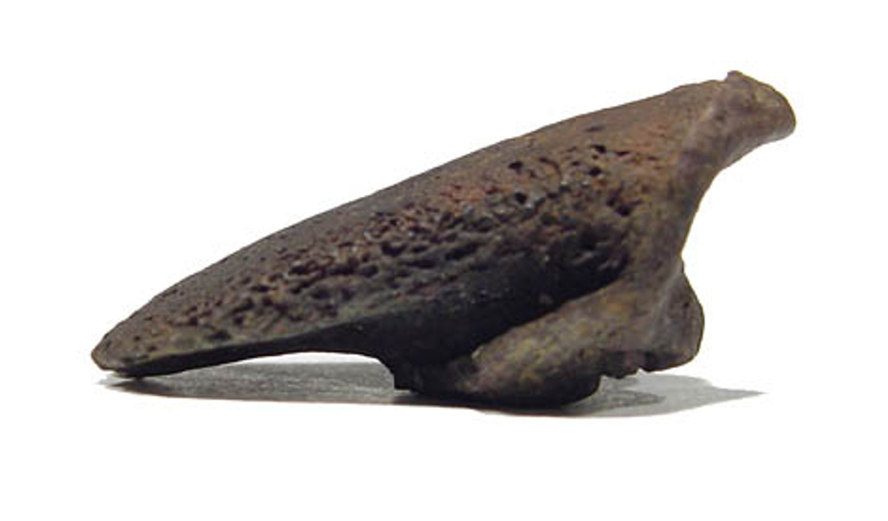 GIANT ARMADILLO FLORIDANUS FOSSIL FOOT CLAW *LM5-018