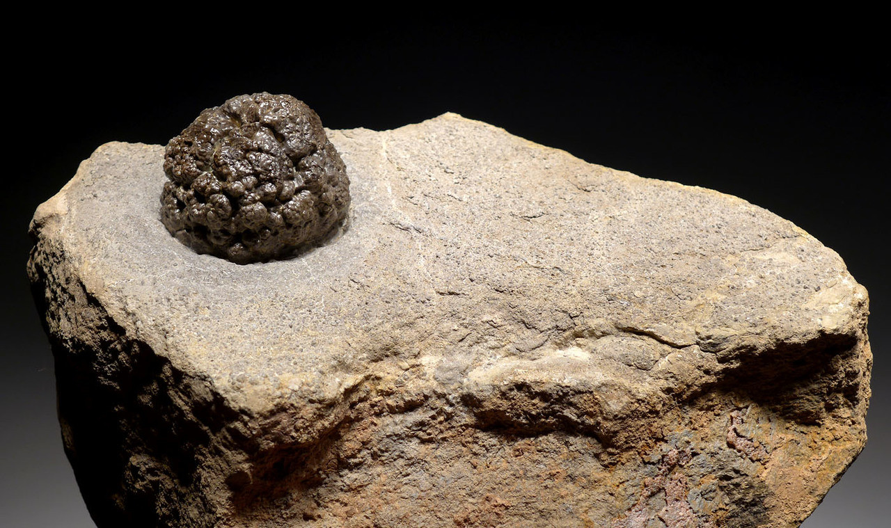 PERMIAN LIFELIKE FRESHWATER FOSSIL STROMATOLITE COLONY FROM GERMANY *ST017
