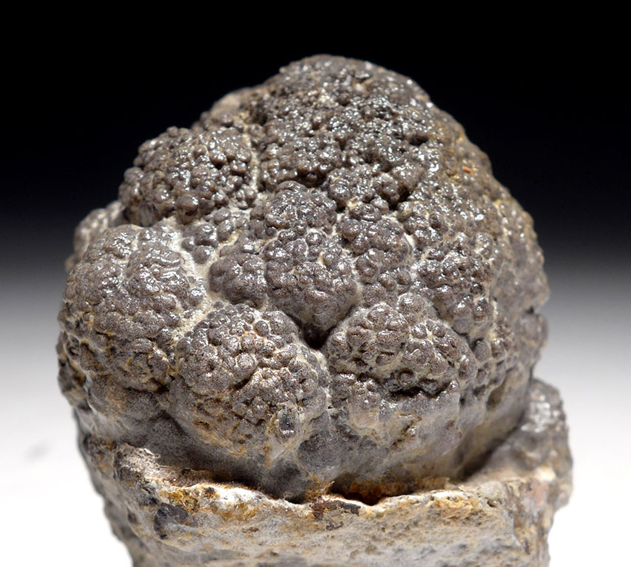 RARE PERMIAN LACUSTRINE FOSSIL STROMATOLITE COLONY IN NATURAL FORM *ST016