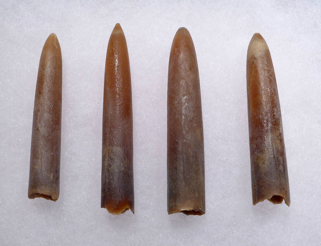FOUR DINOSAUR ERA BELEMNITE FOSSILS OF GONIOTEUTHIS OF SOLID TRANSLUCENT CALCITE *BEL110