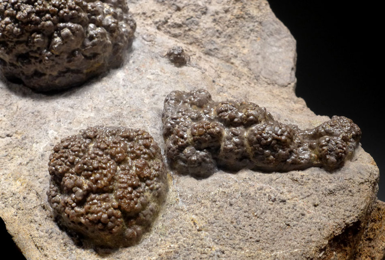 RARE PERMIAN FRESHWATER FOSSIL STROMATOLITE COLONIES ON HOST ROCK *ST006