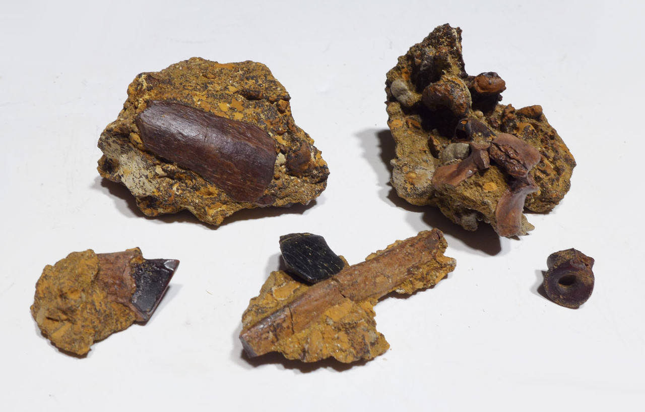 CRETACEOUS DINOSAUR AGE MATRIX FOSSILS FROM THE LANCE FORMATION *DBM01