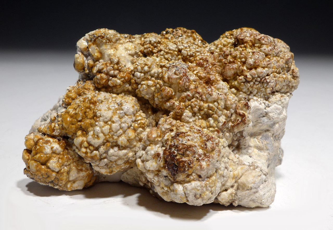 NATURAL FORM FOSSIL STROMATOLITE FROM AN ANCIENT OLIGOCENE LAKE  *ST026