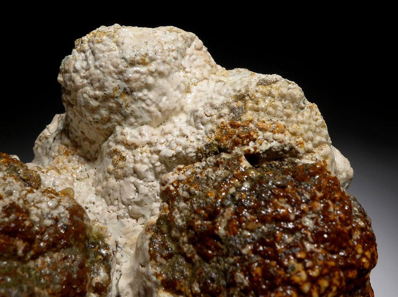 NATURAL FOSSIL STROMATOLITE CYANOBACTERIA COLONY FROM AN ANCIENT OLIGOCENE LAKE  *ST020