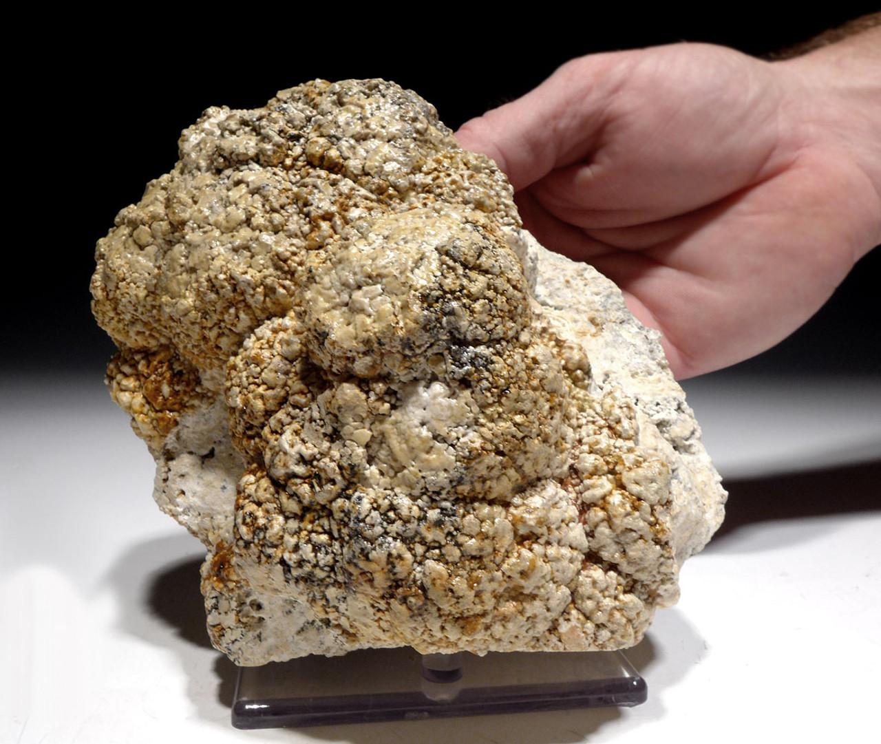 OLIGOCENE FOSSIL STROMATOLITE CYANOBACTERIA BALL COLONIES FROM AN ANCIENT LAKE  *ST028