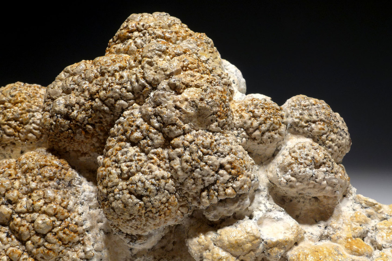 OUR FINEST MUSEUM-CLASS STROMATOLITE FOSSIL WITH NATURAL BACTERIA BALL COLONIES FROM A PREHISTORIC LAKE  *ST019