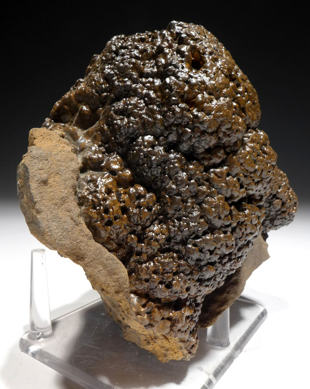 EXTREMELY RARE LARGE PERMIAN CYANOBACTERIA FOSSIL STROMATOLITE COLONY IN NATURAL FORM *STX505