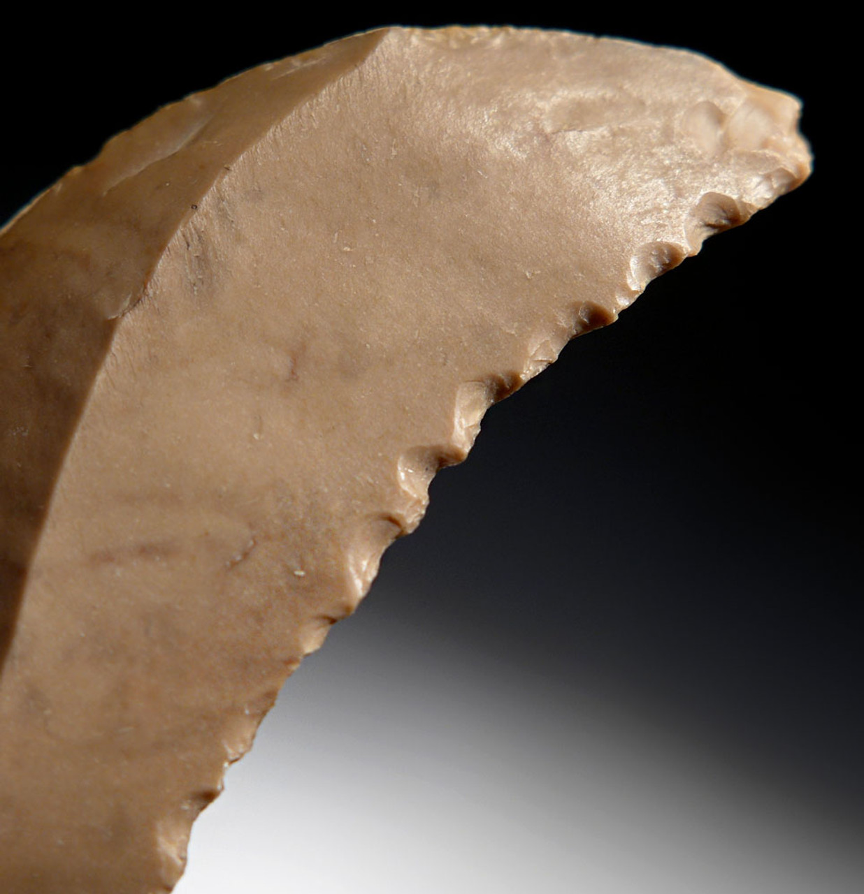 RARE EGYPTIAN PREDYNASTIC NEOLITHIC FLINT SAW DENTICULATE STONE TOOL *CAP244