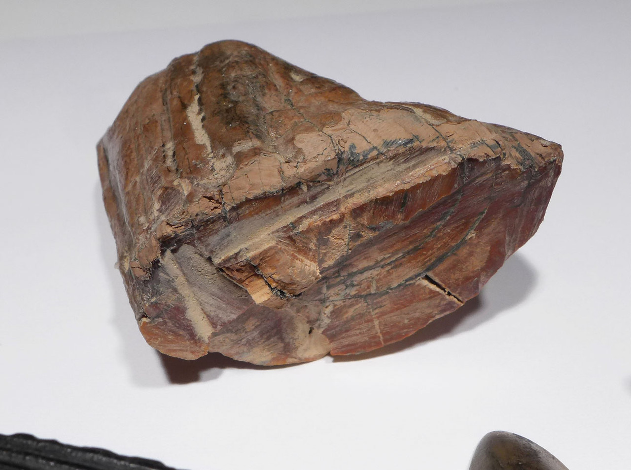 FLORIDA FOSSIL COLLECTION OF PREHISTORIC SHARK AND MAMMAL FOSSILS FOR TEACHERS OR KIDS  *FL22