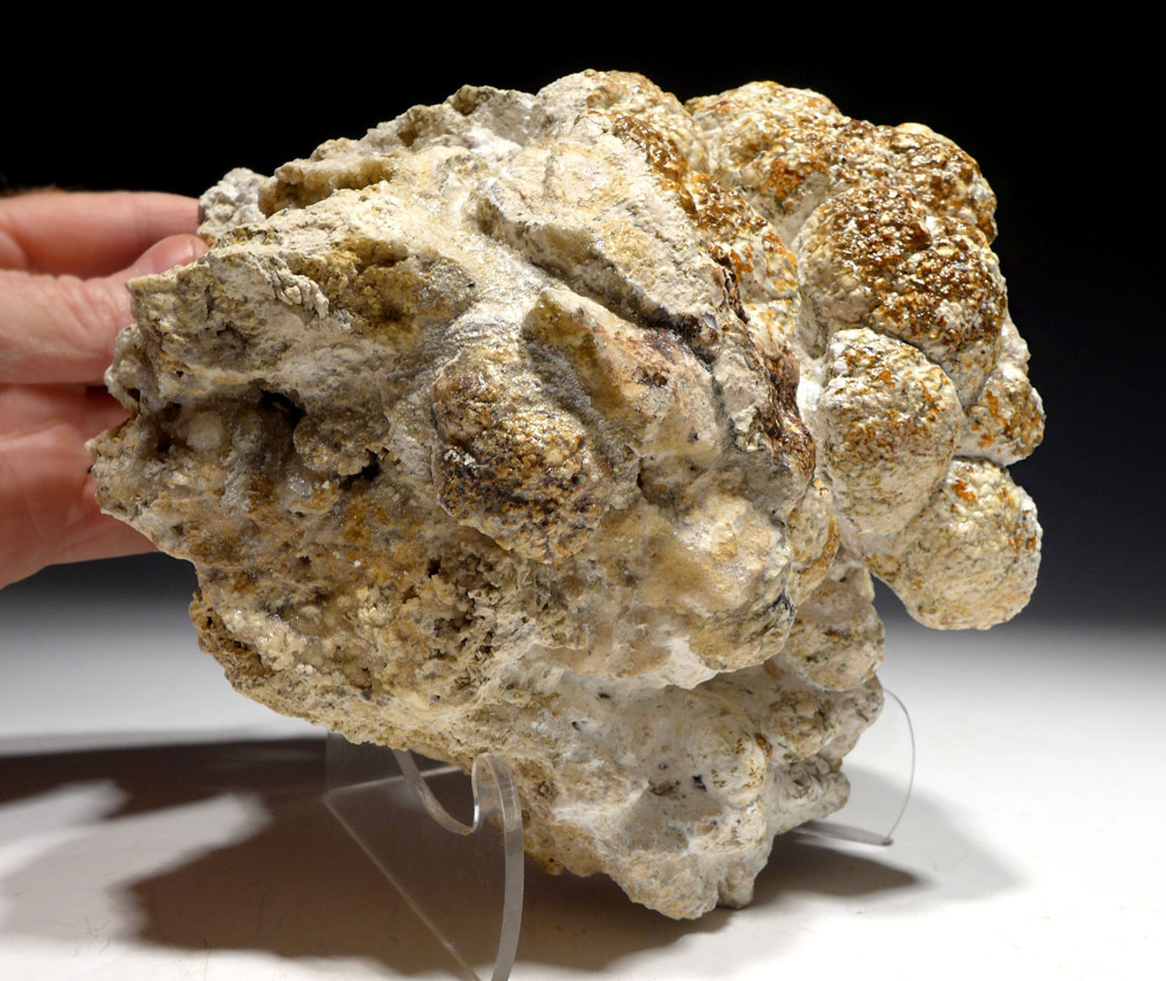 LARGE FOSSIL CYANOBACTERIA STROMATOLITE COLONY FROM A 30 MILLION YEAR LAKE  *STX518