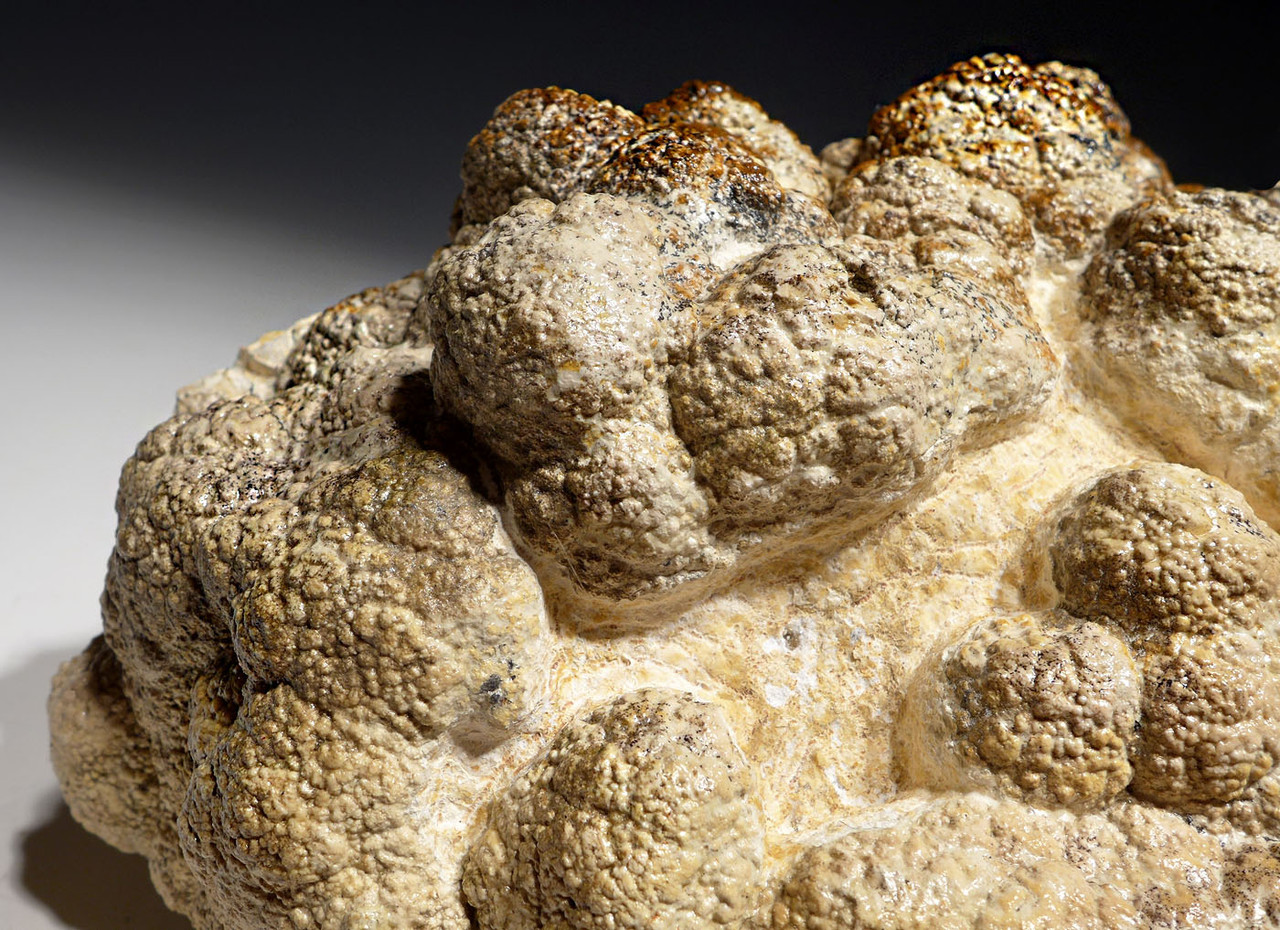 LARGE MUSEUM-CLASS STROMATOLITE FOSSIL WITH NATURAL BACTERIA BALL COLONIES FROM AN OLIGOCENE LAKE  *STX513