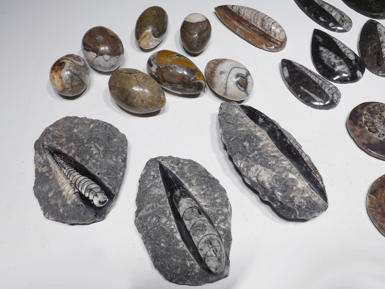 28 PIECE POLISHED FOSSIL GIFT OR TEACHING EDUCATION COLLECTION  *SW77
